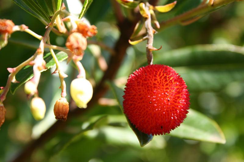 Tropische Fruchte Botanischer Garten Auf La Palma Kanaren