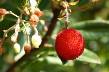 Tropische Chte Botanischer Garten Auf Palma Kanaren